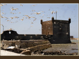 Essaouira .....the birds by fogz, Photography->Castles/Ruins gallery