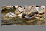 Splish Splash A Bird Bath by tigger3, Photography->Birds gallery
