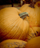 Pumpkins by rforres, Photography->Food/Drink gallery