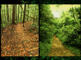 Jungle ways by priyanthab, Photography->Landscape gallery