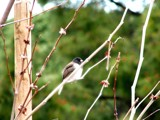 Hunter by obscene_ness, Photography->Birds gallery