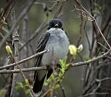 Bird by GIGIBL, photography->birds gallery