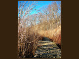 I'm on a boardwalk by kiciaczek, photography->landscape gallery