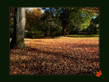 Autumn Carpet by LynEve, Photography->Nature gallery