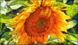 Painted Sunflower by LynEve, photography->manipulation gallery