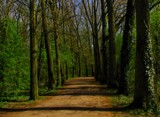 let 's go for a walk 14 by gaeljet2, Photography->Landscape gallery