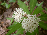 White Milkweed and Friend by stoneytreehugger, Photography->Flowers gallery