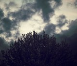 Dark Tree by treenbebe, photography->skies gallery