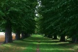green path by Elini, photography->landscape gallery
