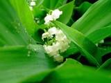 Hidden Secret by aitmn10, Photography->Flowers gallery