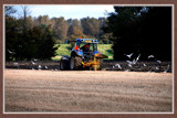 Zeeland Farming 04, Ploughing In The Polder by corngrowth, Photography->Landscape gallery