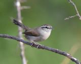Often Heard but not Seen by garrettparkinson, photography->birds gallery