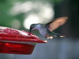 Backyard Buddies IV by Hottrockin, Photography->Birds gallery