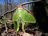 Hiding by capturer, Photography->Butterflies gallery