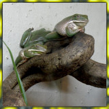 ..just hanging out by Zeniac, photography->reptiles/amphibians gallery