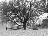 Sitting Under The Tree by bfrank, contests->b/w challenge gallery