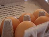 Eggs In A Carton by shorto, Photography->Macro gallery