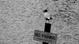 Me? I'm Not Fishing! by braces, photography->birds gallery