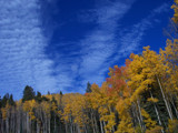 Aspens in fall by bridgebrain, photography->skies gallery