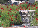 Poppies at Ephessos by jcferg99, photography->architecture gallery