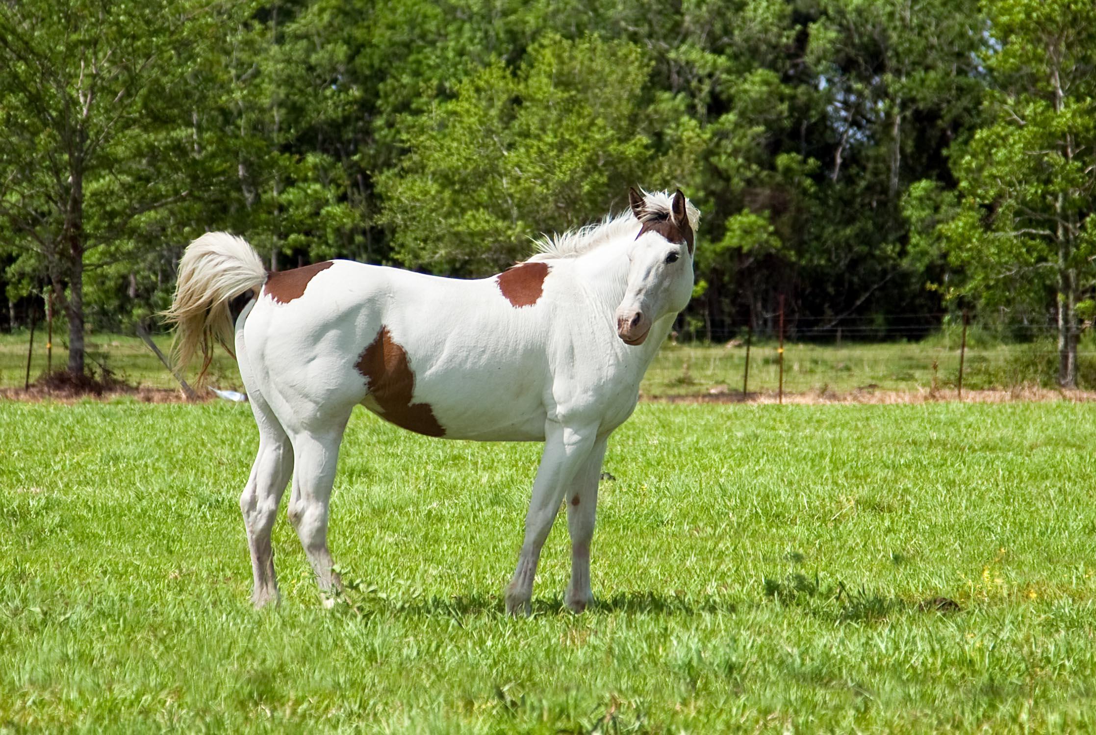 Лошади фото с разными цветами