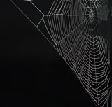 The Web by biffobear, photography->insects/spiders gallery