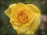 something yellow by wimida, Photography->Flowers gallery