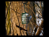 Birdie At  The Feeder by tigger3, Photography->Birds gallery