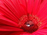 For a Drop of Water by Pistos, photography->flowers gallery
