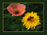 One and two is three by wimida, Photography->Flowers gallery