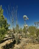 Ocotillos y Molino by DesertDenizen, photography->gardens gallery