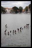 Kandy Lake... by Ravindra077, Photography->Nature gallery
