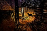 Eye of the Hunter by snapshooter87, photography->manipulation gallery