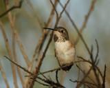 Little Buddy by garrettparkinson, photography->birds gallery