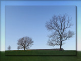 three trees .... by fogz, Photography->Landscape gallery