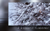 Winter's Canvas by nmsmith, Photography->Macro gallery