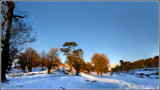 Bradgate Trees by Mannie3, photography->landscape gallery