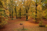 A walk in the forest - LOOK A BENCH!!!! by Paul_Gerritsen, Photography->Nature gallery