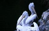 Break by boremachine, Photography->Birds gallery