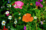 Rainbow Colours by braces, Photography->Flowers gallery