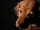 sydney by orange_freak, Photography->Pets gallery