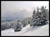 In snow cover by ekowalska, Photography->Landscape gallery