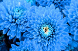 I am blue by ekowalska, photography->flowers gallery