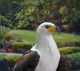 Freedom Watch by slow_2gojoe, Photography->Birds gallery