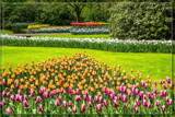 Keukenhof 17 by corngrowth, photography->gardens gallery