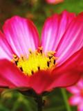 Vibrant by silentrhythmic, Photography->Flowers gallery