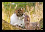 Feline by kodo34, Photography->Pets gallery