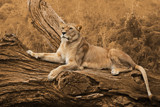 Queen of the Jungle by Ramad, photography->animals gallery