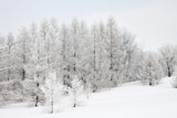 A Winter Silence by Silvanus, photography->landscape gallery