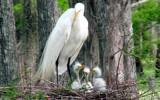 Nesting  29 by 100k_xle, photography->birds gallery